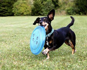 Best Dog Frisbee [5 Best Durable Dog Frisbees] 2