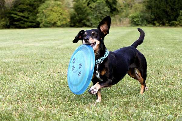 Best Dog Frisbee [5 Best Durable Dog Frisbees]