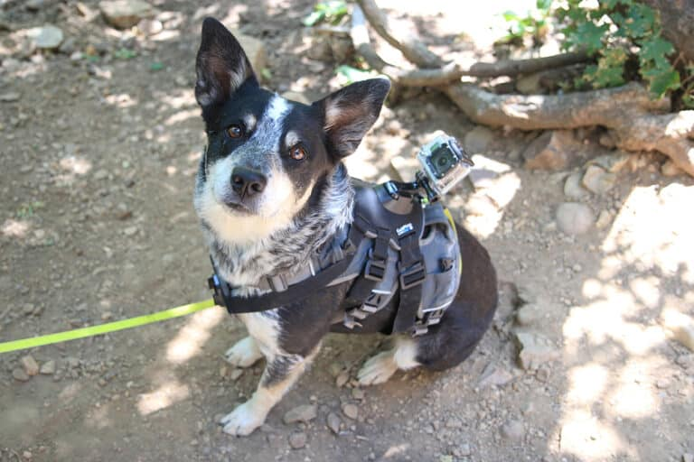 Best Dog Harness For Hiking [Quality and Budget]
