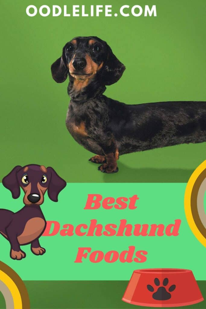 best dachshund food poster with a cartoon and actual dog