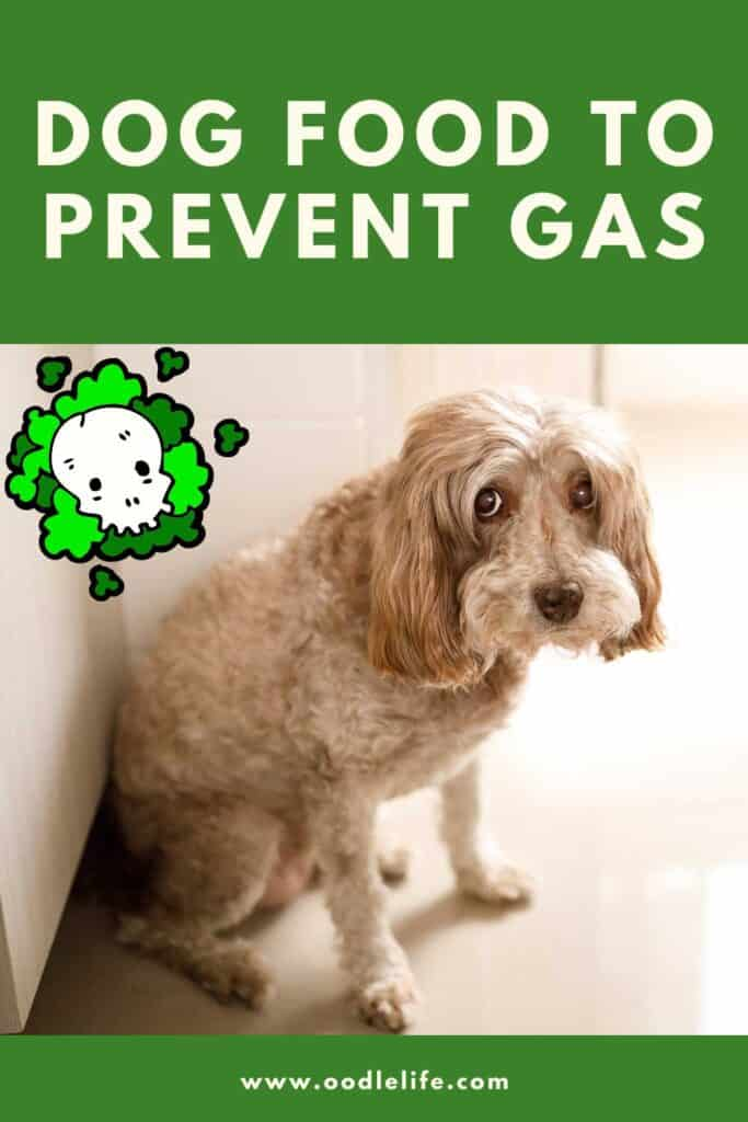 info graphic for Pinterest with smelly dog thinking about best dog food to prevent gas