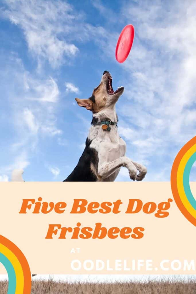 a dog jumps at one of the best dog frisbees