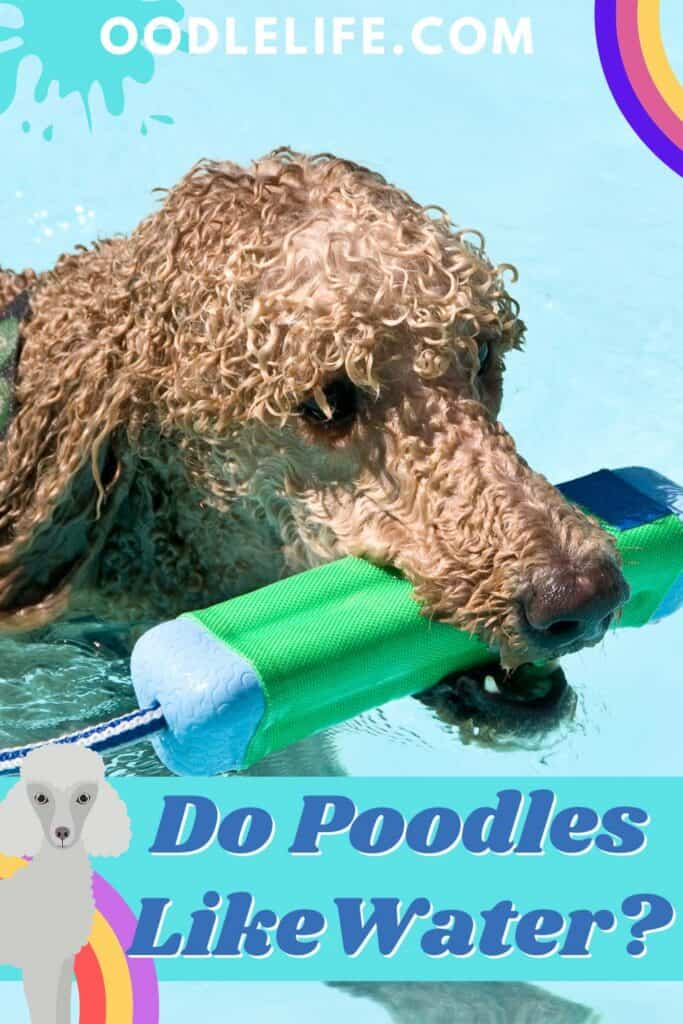 do poodles like water