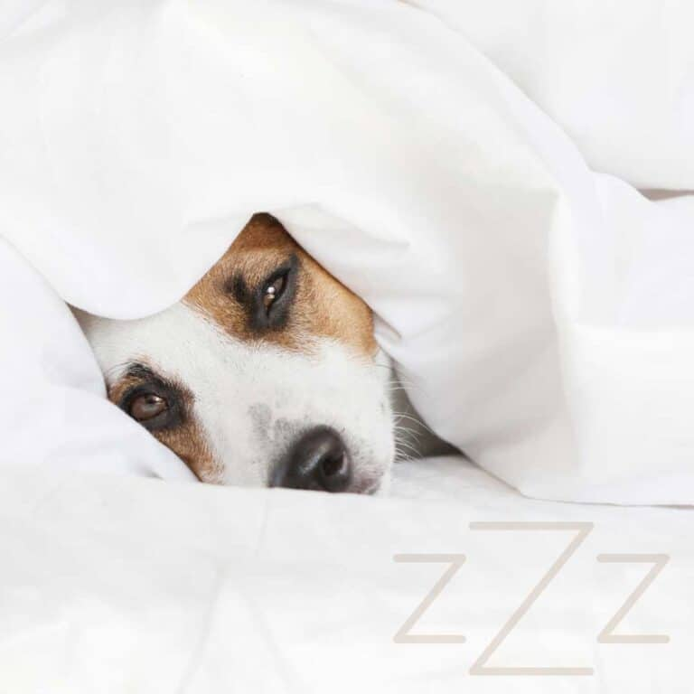 Should I Let My Dog Sleep in My Bed? [Pros and Cons]