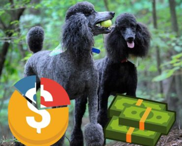 two poodles in a forest with a graphic of budget over the top