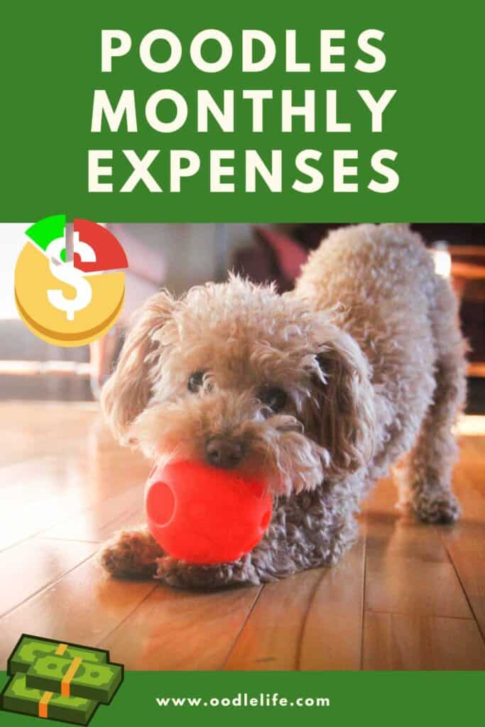 poodles monthly expenses