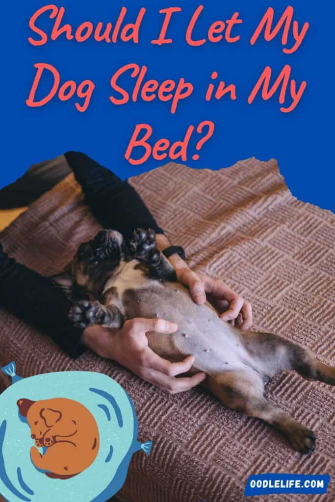 should I let my dog sleep in my bed infographic dog laying on back