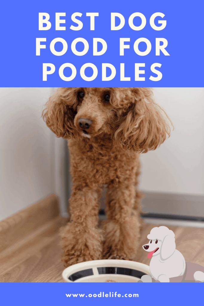 best dog food for poodles