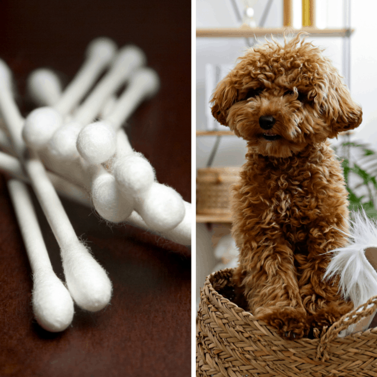 My Dog Ate a Q-Tip [What to Do!?]