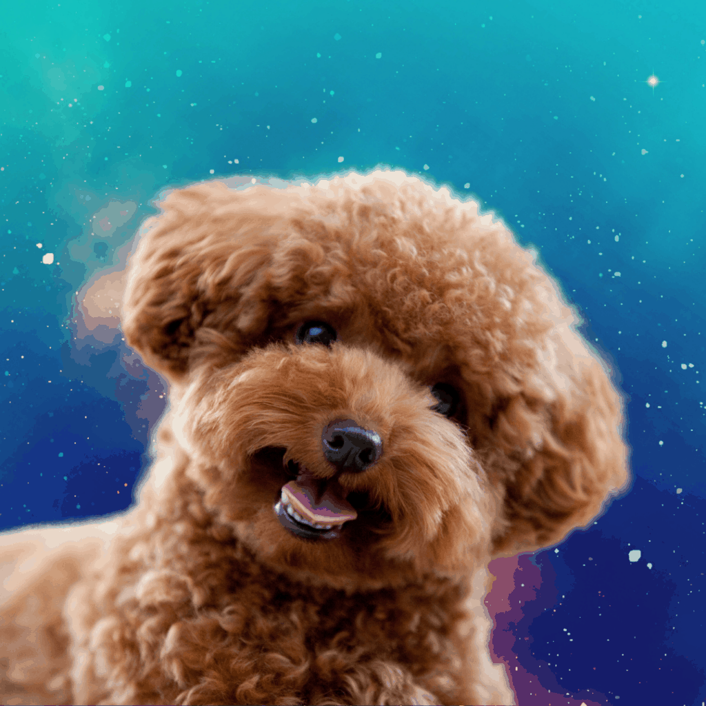 goldendoodle looking cute in the stars
