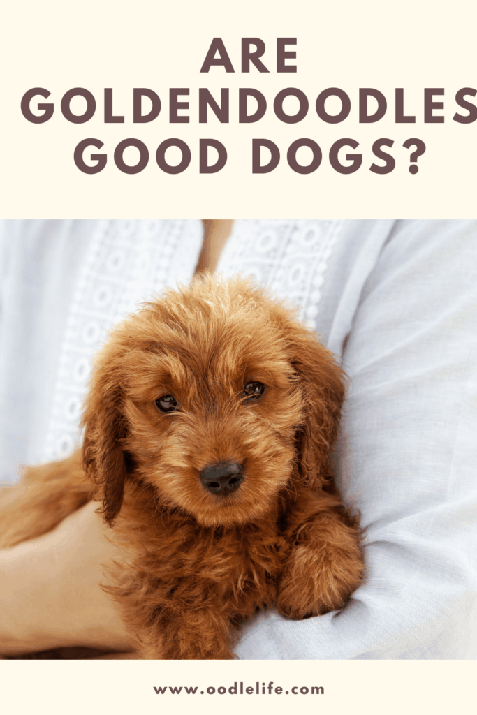 are goldendoodles good dogs