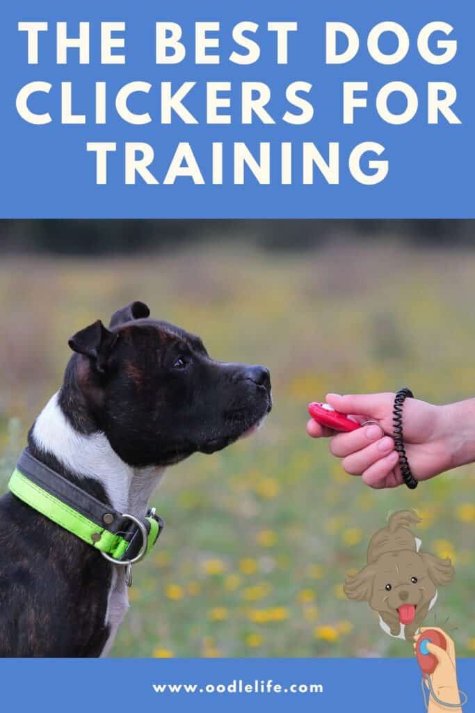 best dog clicker for training photo of dog being trained