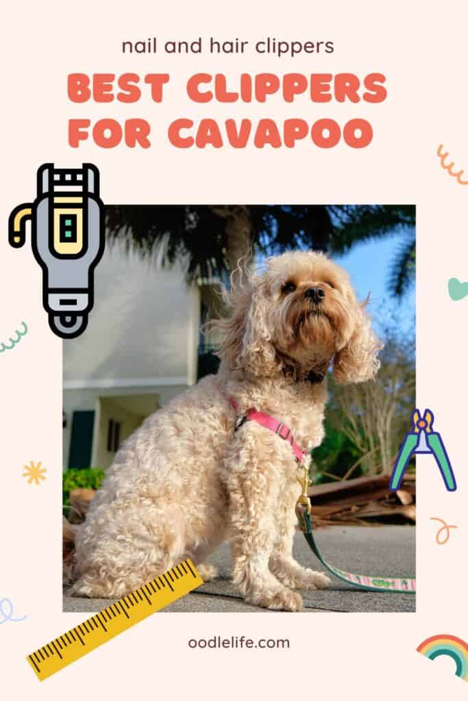 best clippers for cavapoo