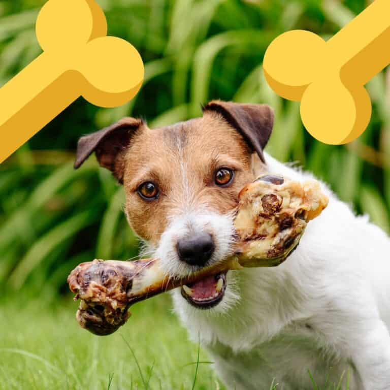 5 Best Dog Bones for Aggressive Chewers