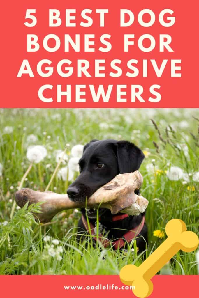 best bones for aggressive chewers