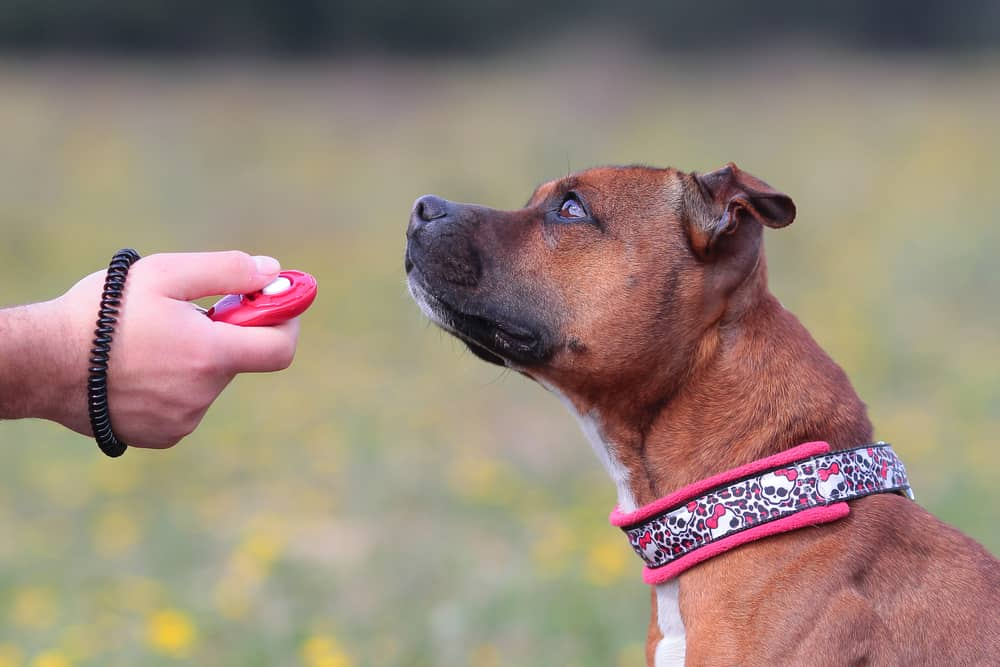 The Best Dog Clicker [Budget Friendly and Perfect] 1
