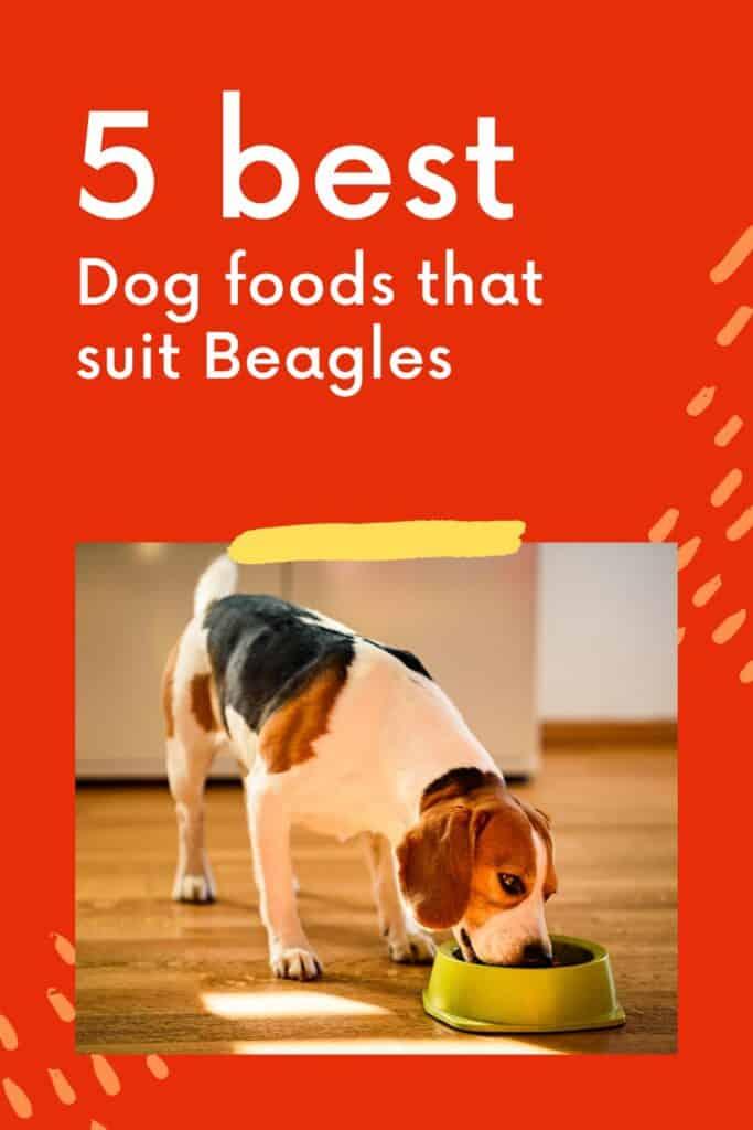 best dog food for beagles 5 best Pinterest infographic