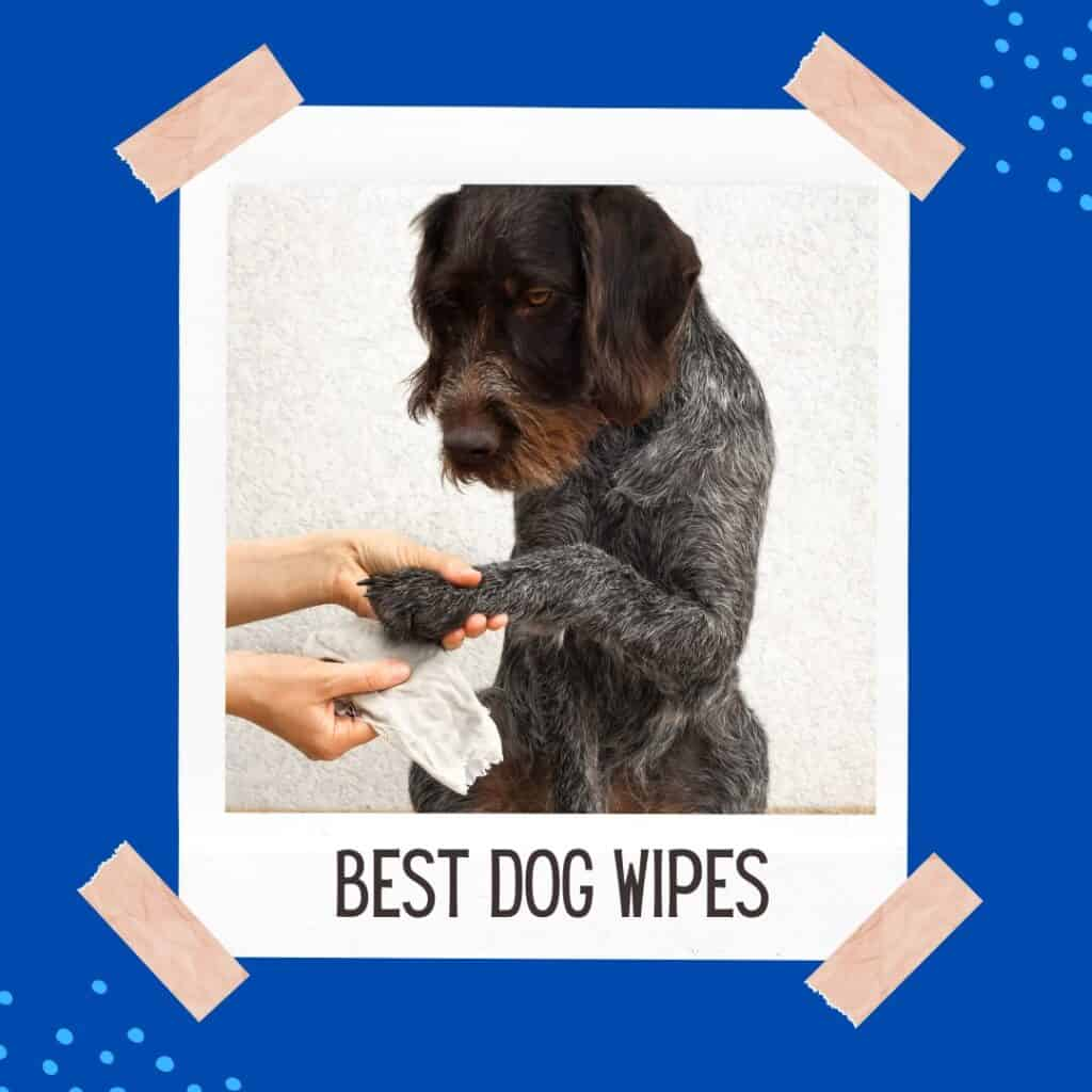 best dog wipes polaroid image of a dog having paws wiped