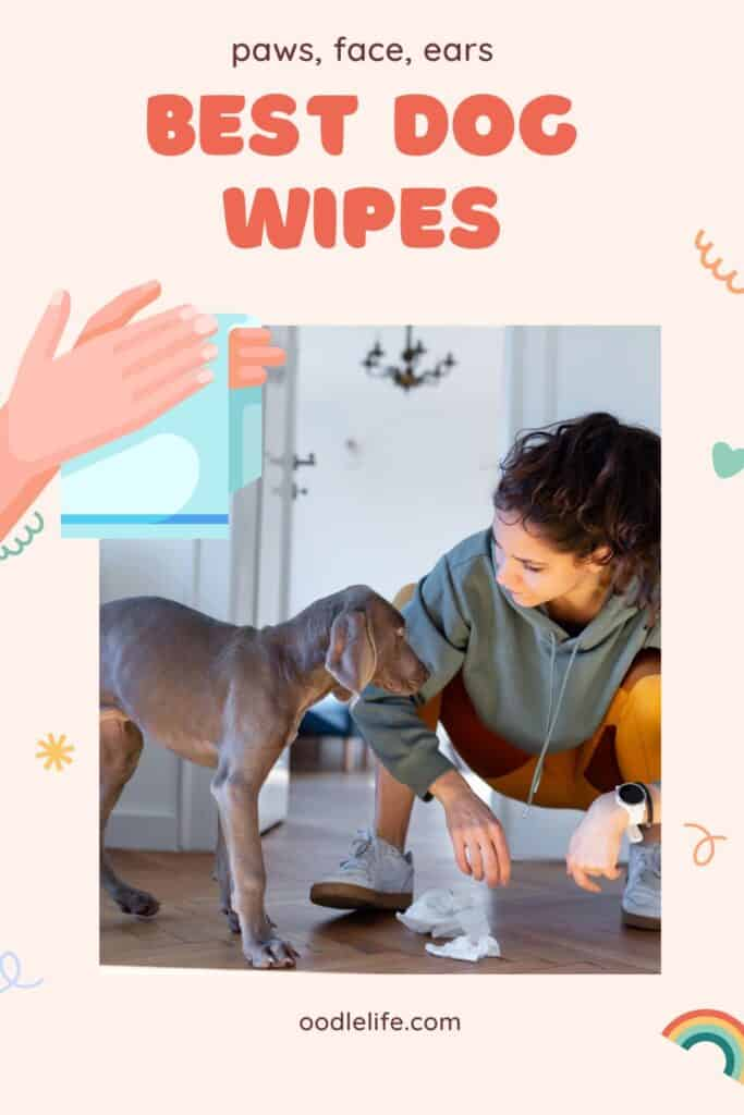 info on picking the best dog wipes feature photo is a woman crouching near a dog and some wipes on the floor