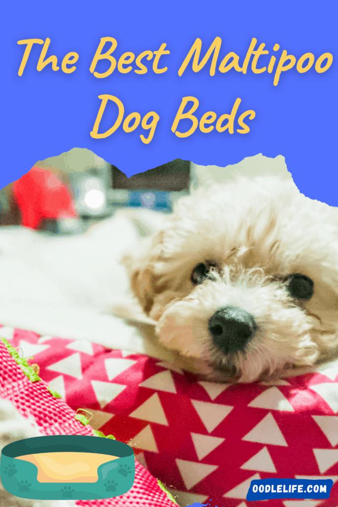 best maltipoo dog beds