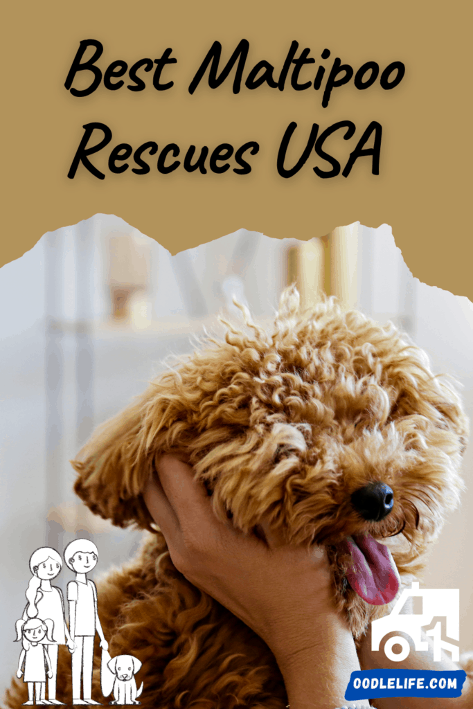best maltipoo rescues usa