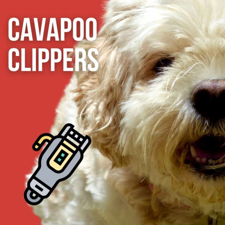 Best Clippers for Cavapoo [Hair and Nail]