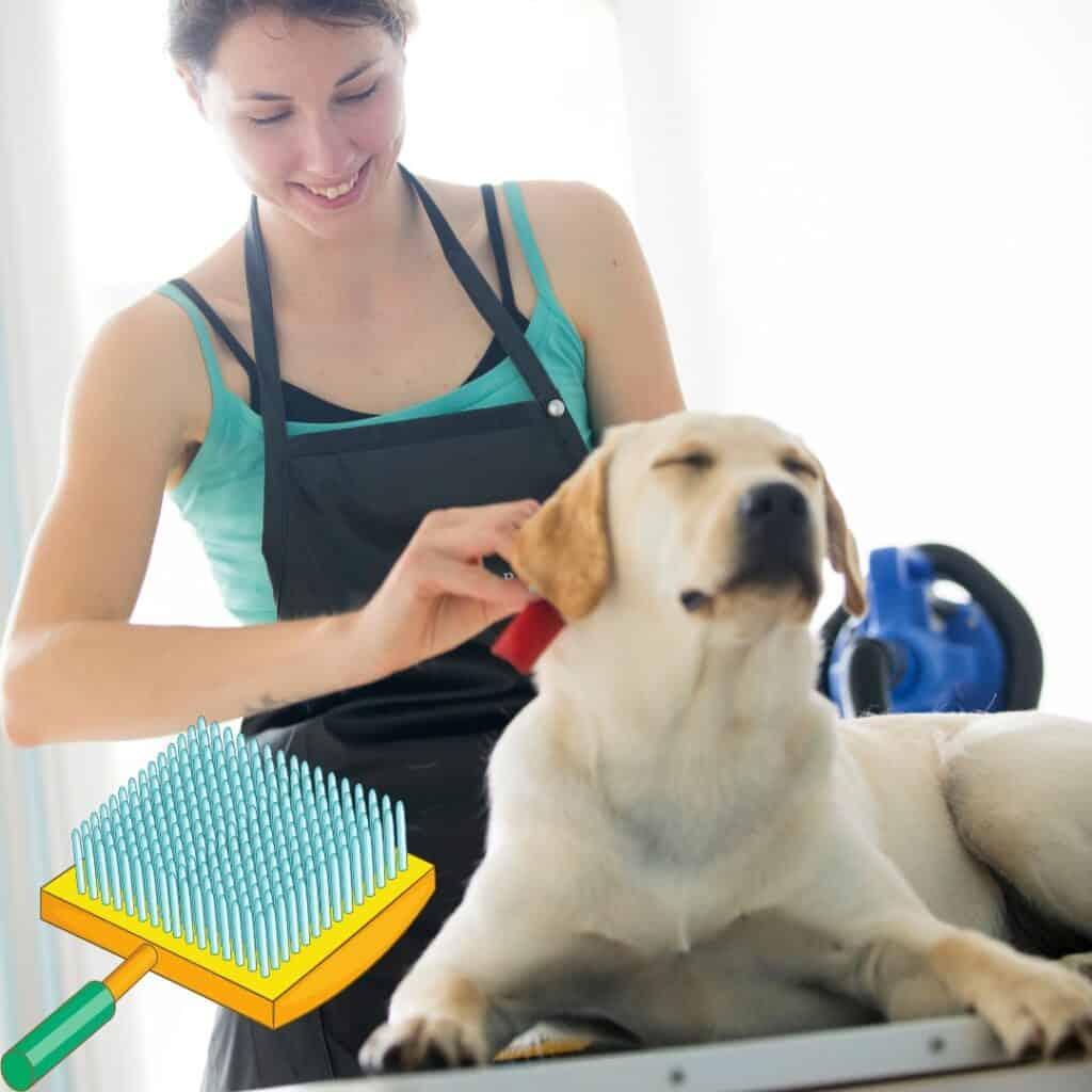 a Labrador enjoying being brushed