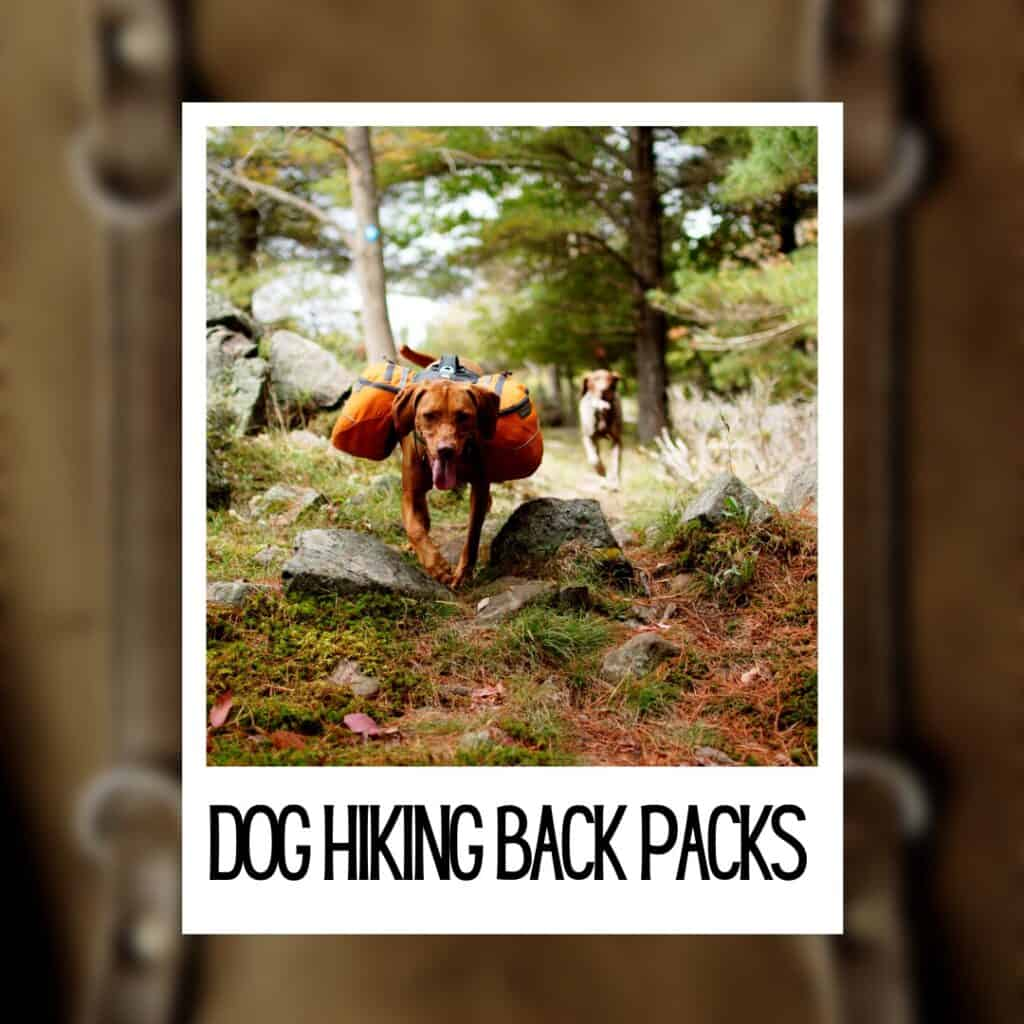 best dog hiking back packs instagram photo of a dog wearing a pack
