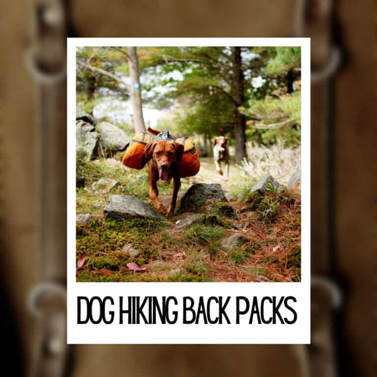 Best Dog Backpack for Hiking [5 Best Durable]
