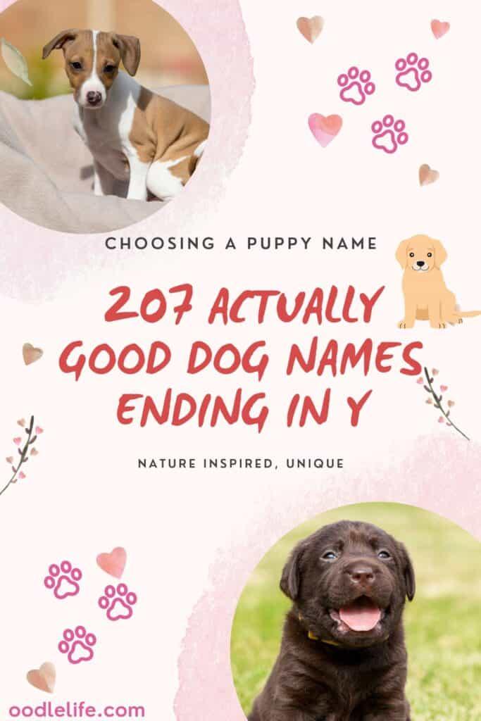 good dog names ending in y or ie sound