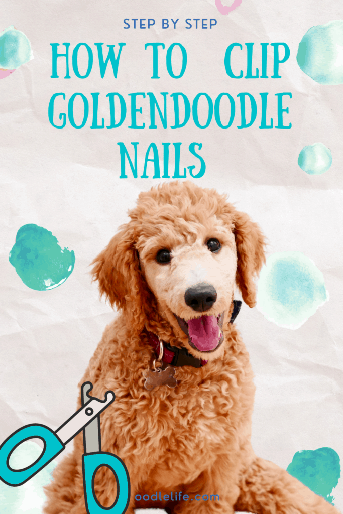 how to clip goldendoodle nails