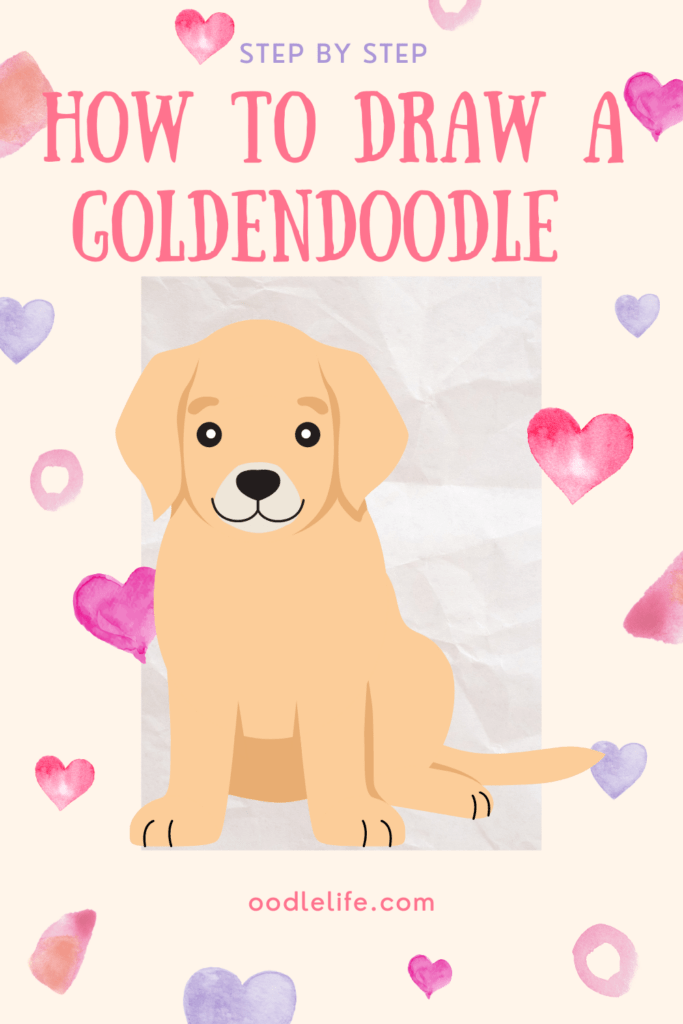 how to draw a goldendoodle guide