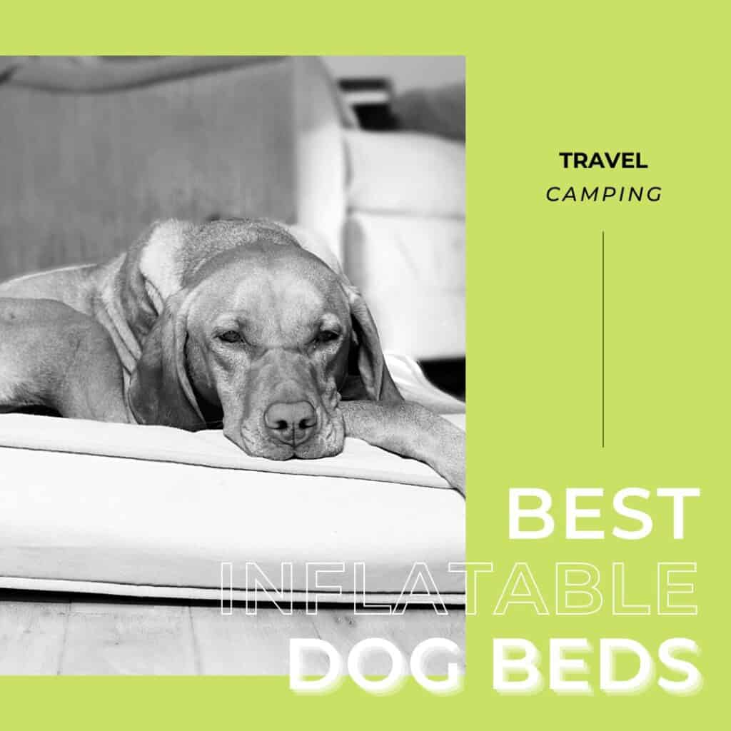 inforgraphic for the best inflatable dog beds