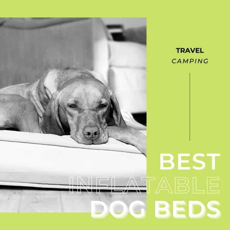 7 Best Inflatable Dog Beds [for Traveling] Plus one to AVOID