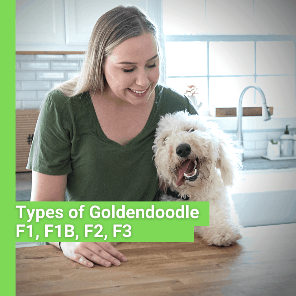 types of goldendoodle infographic with a lady and her dog