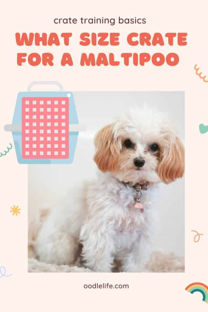 Pinterest graphic asking what size crate for a maltipoo