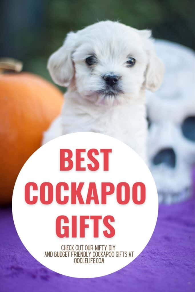 best cockapoo gifts