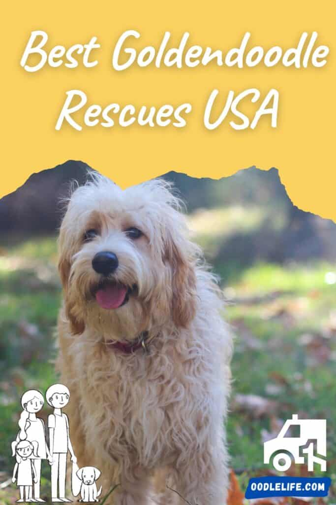 best goldendoodle rescues