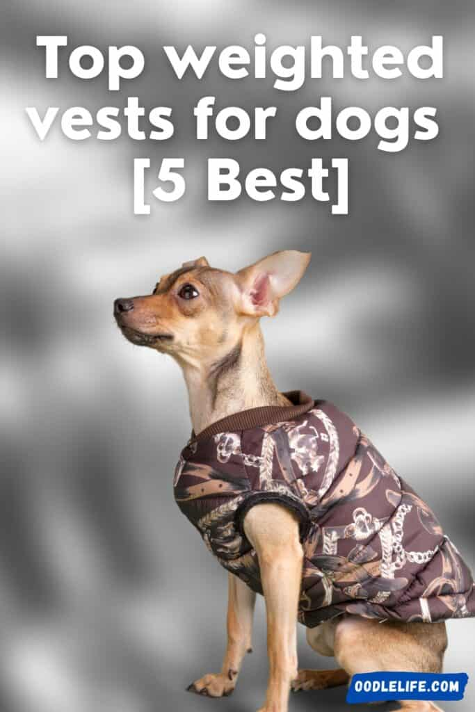 best weighted vests for dogs