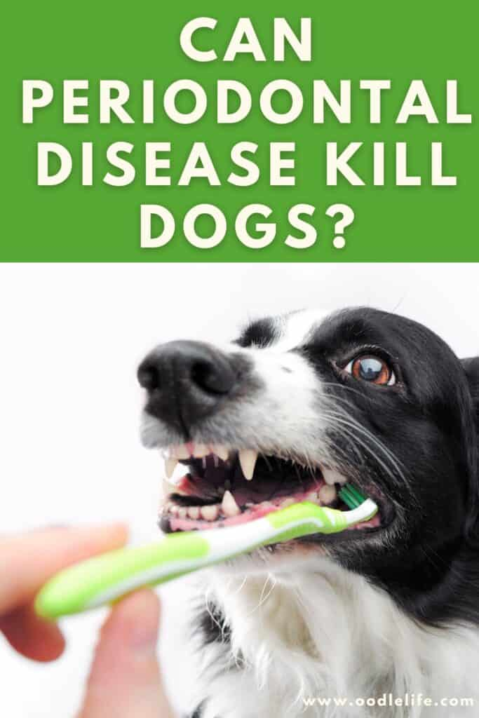 can periodontal disease kill my dog