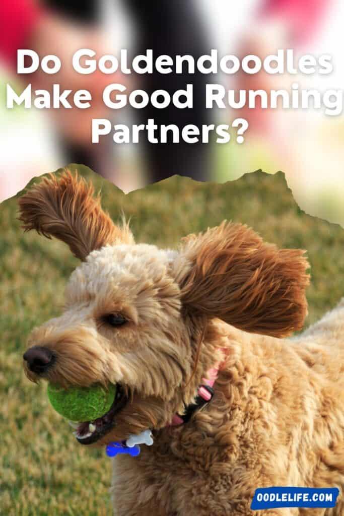 do goldendoodles make good running partners