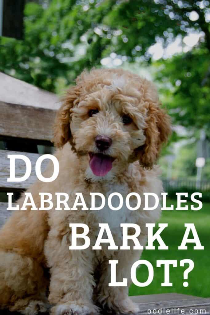 do labradoodles bark a lot