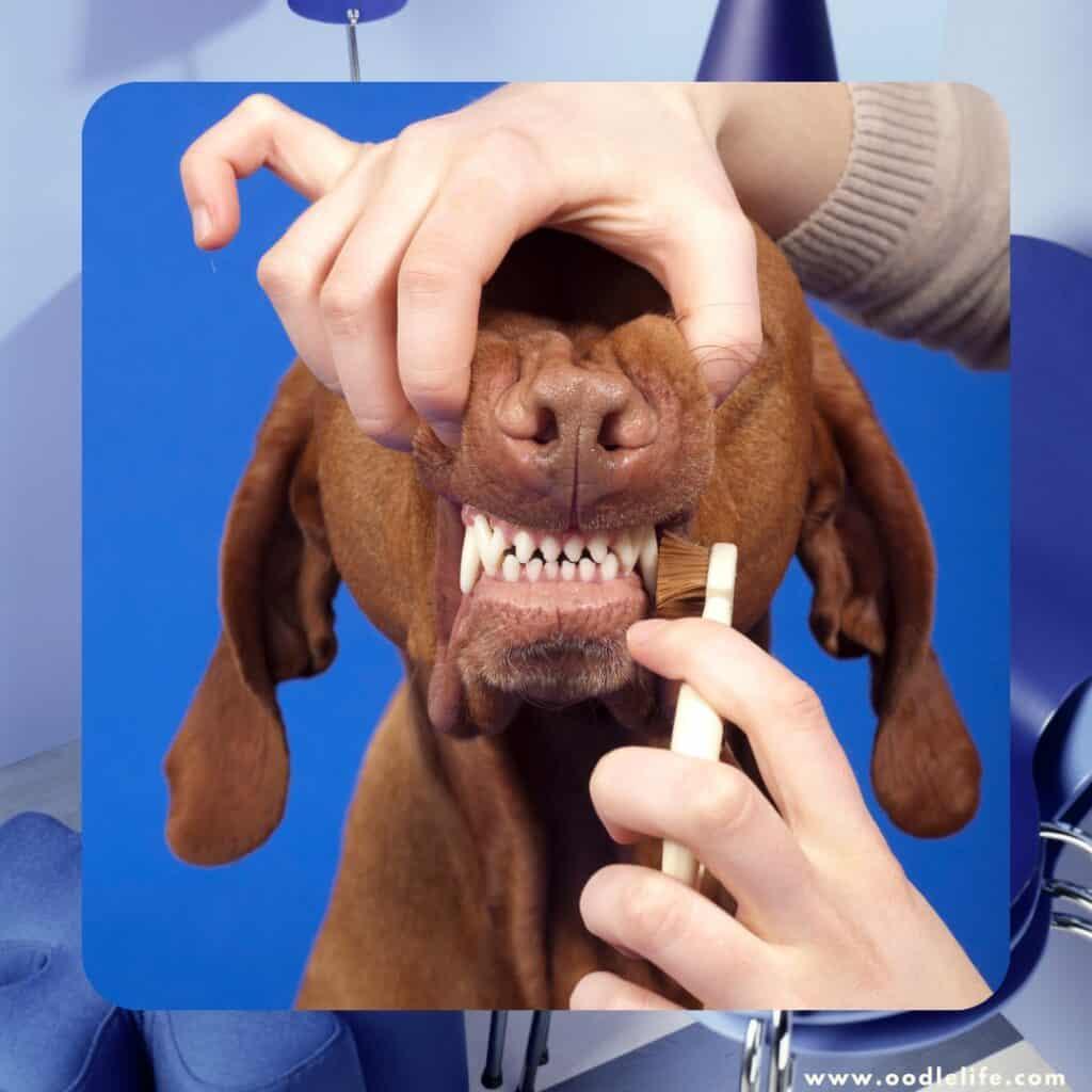 brushing helps prevent dog gum disease