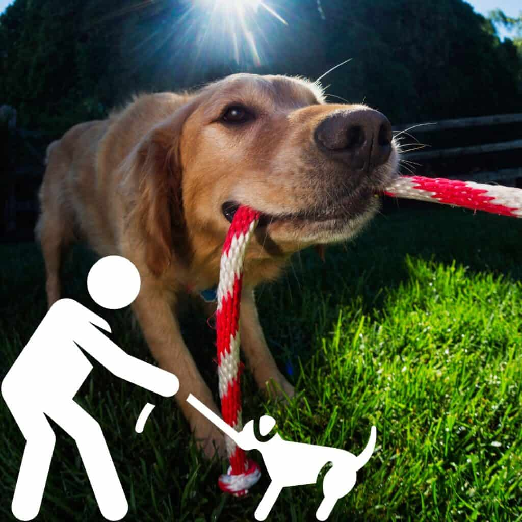 how to play tug of war with dog