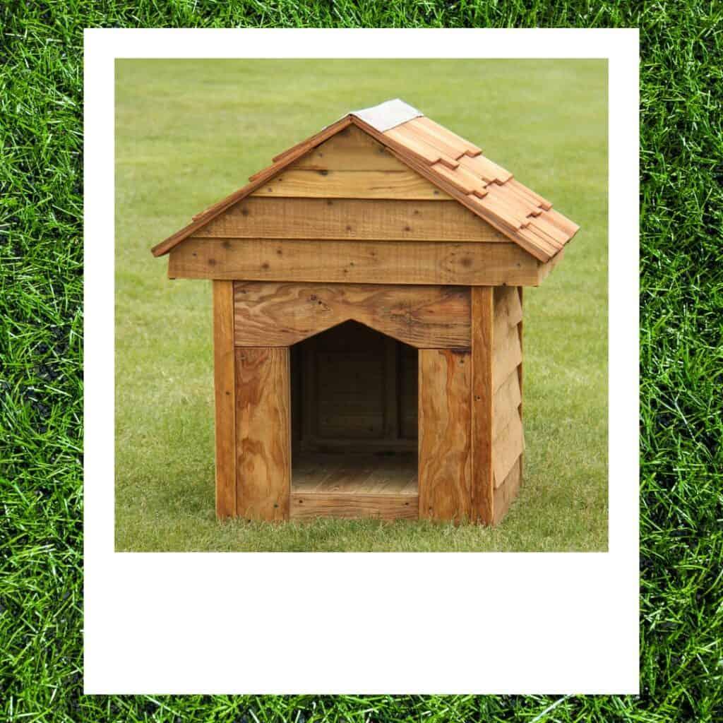 outdoor goldendoodle kennel