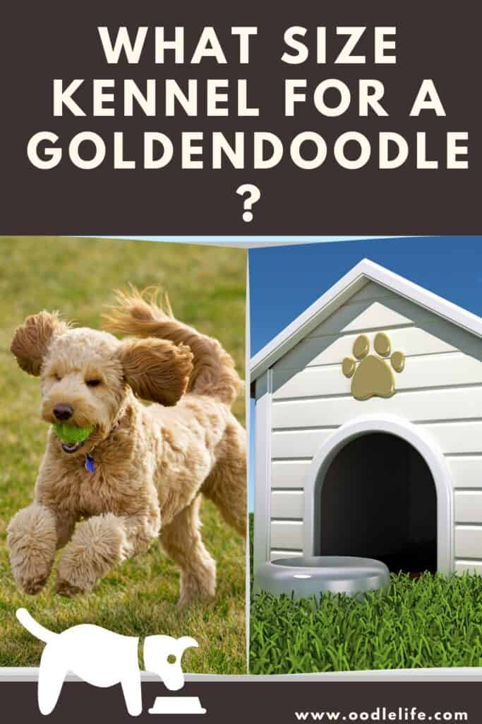 what size kennel for a goldendoodle