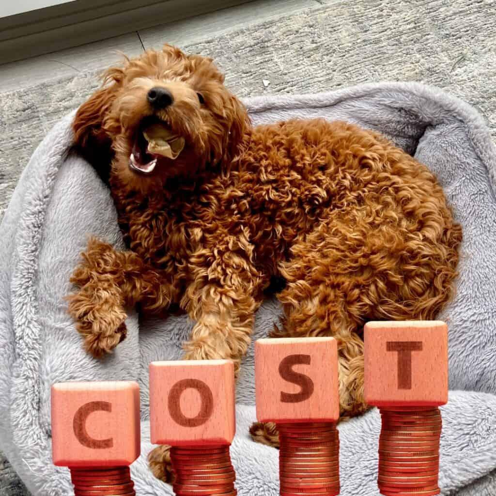 a cute goldendoodle costs alot