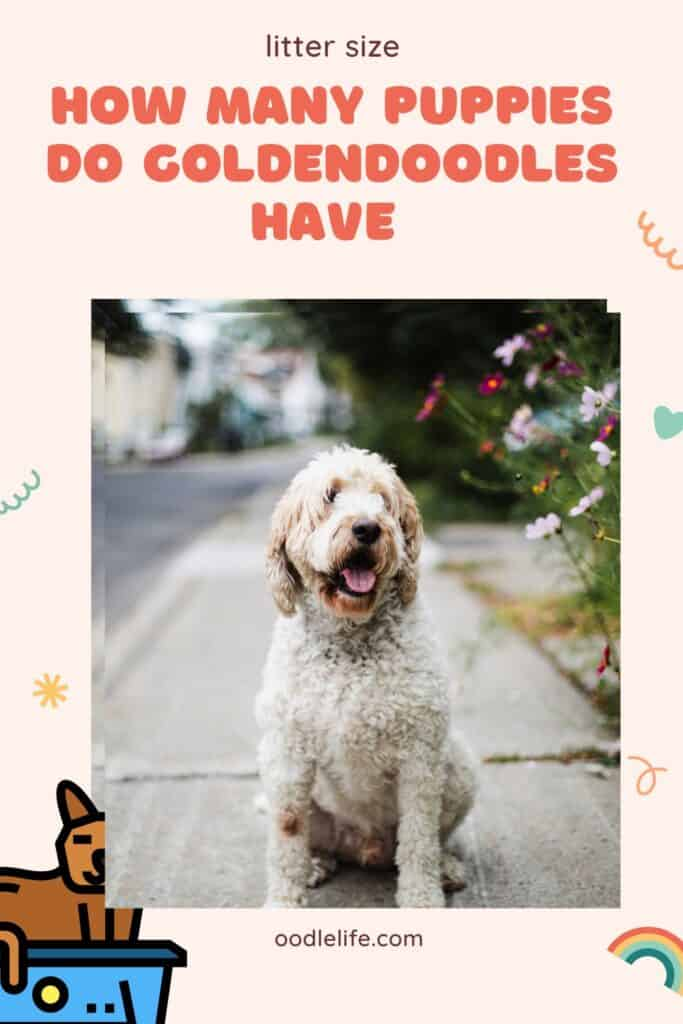 how many puppies do goldendoodles have