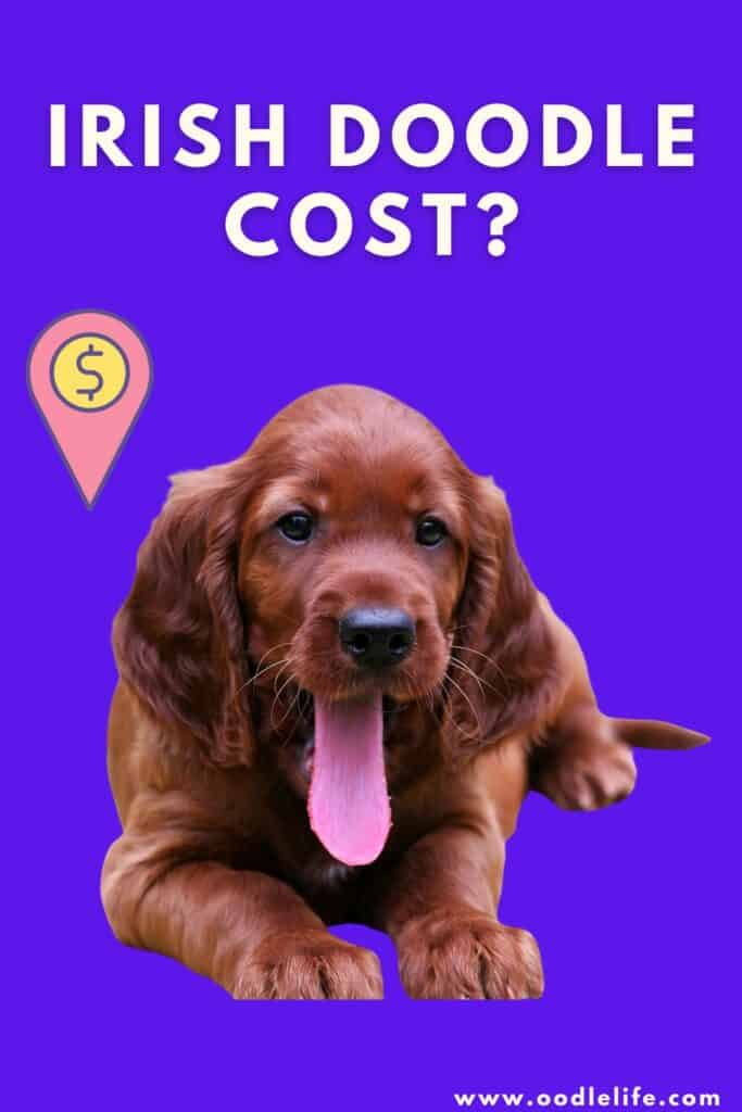 how much does an Irish doodle cost infographic