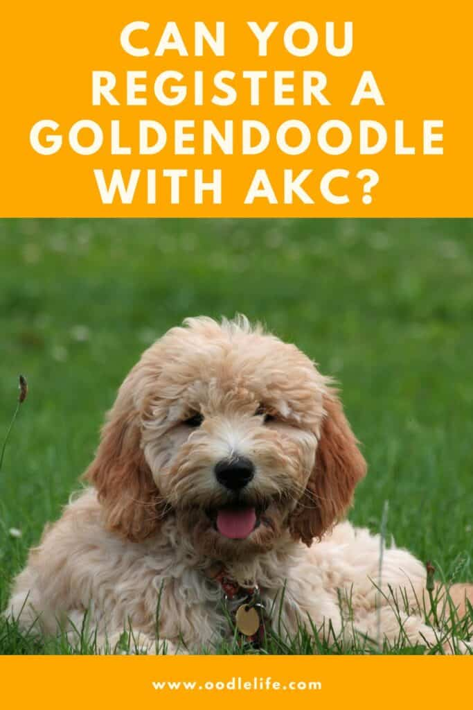 are goldendoodles akc